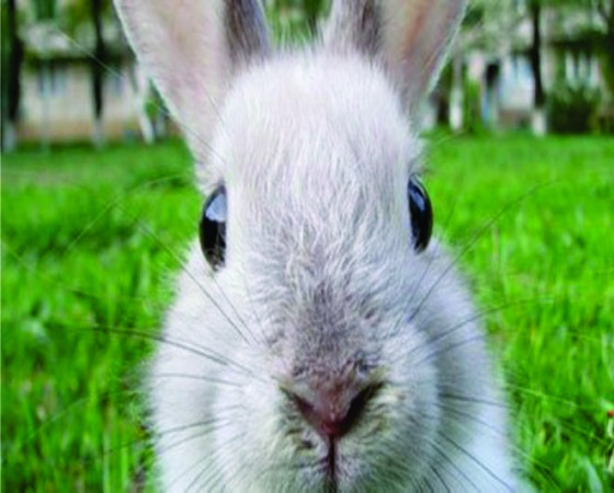 NUTRISTAR Products for Rabbits