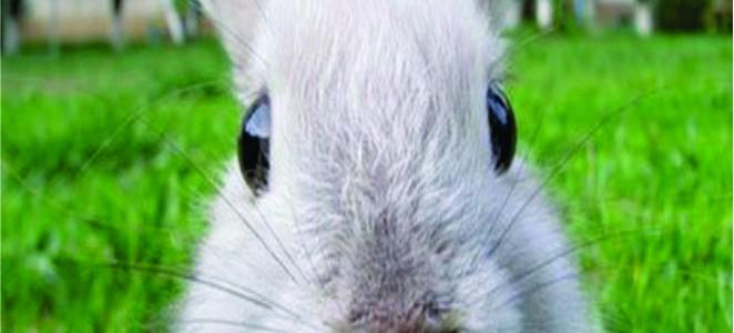 Продукты NUTRISTAR для Кроликов