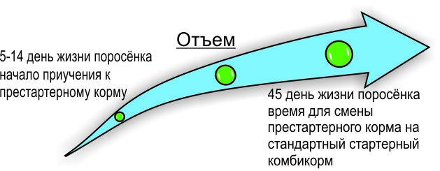 Ecla3C graph growth