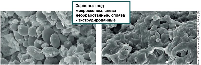 Zernovye_pod_mikroskopom